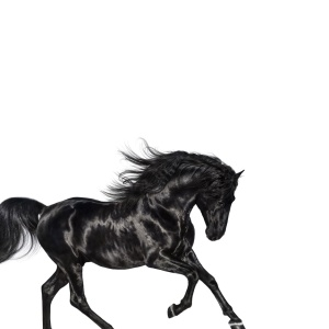 Lil Nas X - Old Town Road